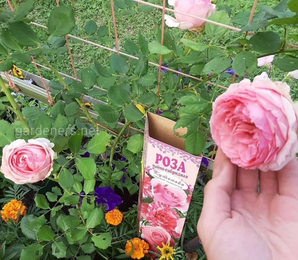 Розы у Виталика