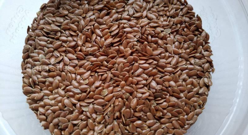 Льняные семена и их польза