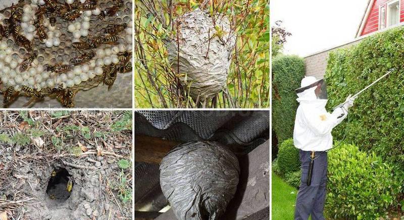 Как избавиться от ос на даче - проверенные способы борьбы с насекомыми