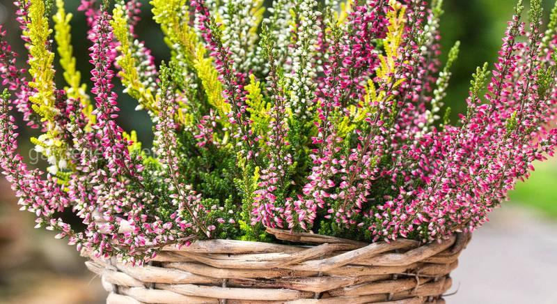 Растения для красоты и для кухни: что можно высадить