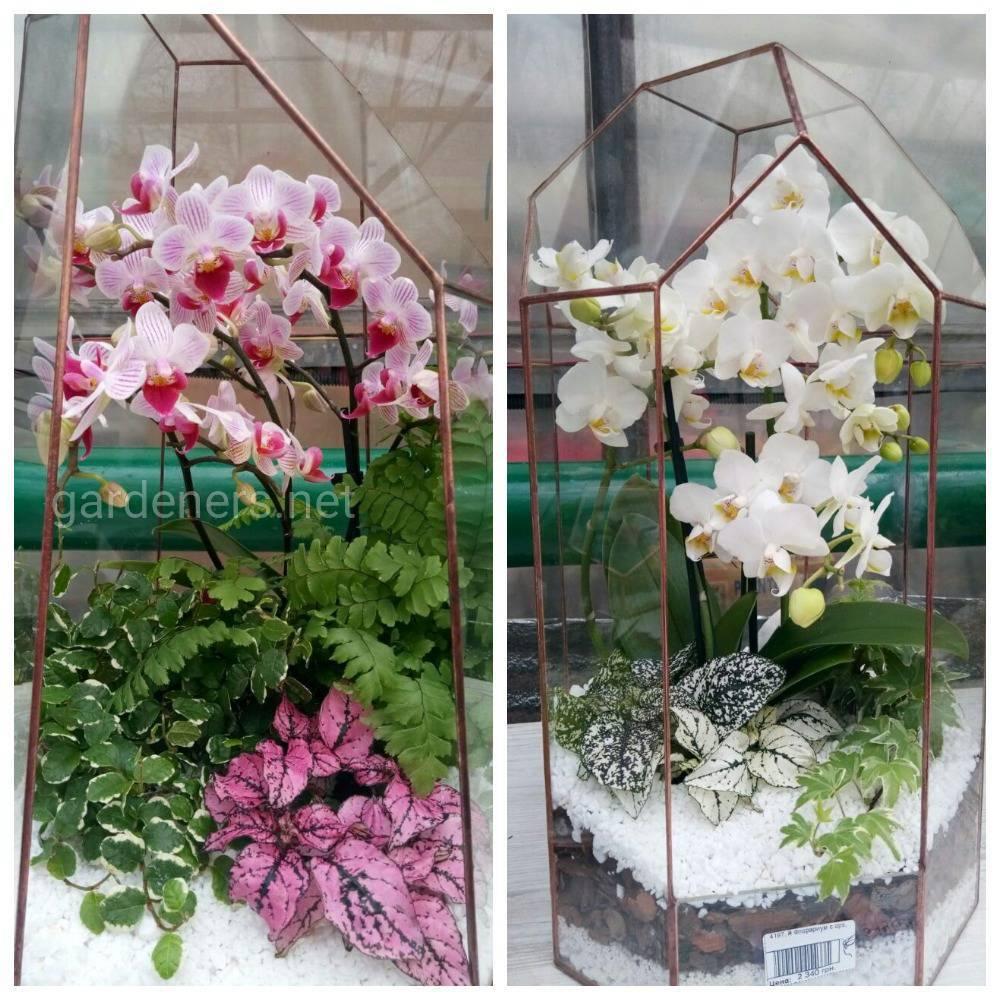 підживлення орхідей
