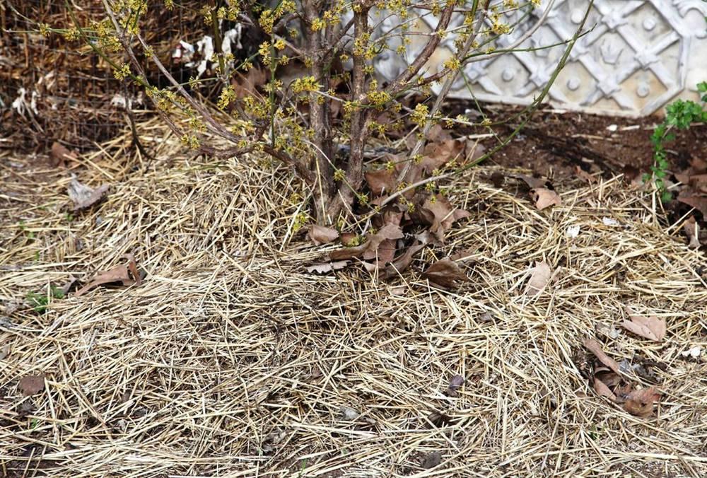 укрытие растений соломой