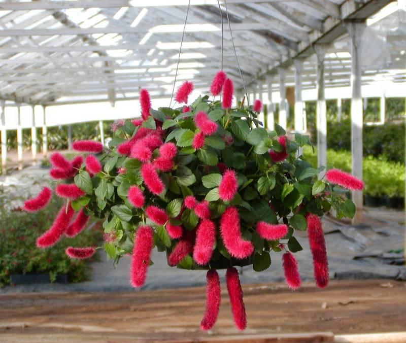 Как поливать и защищать от морозов растения в зимнее время года?