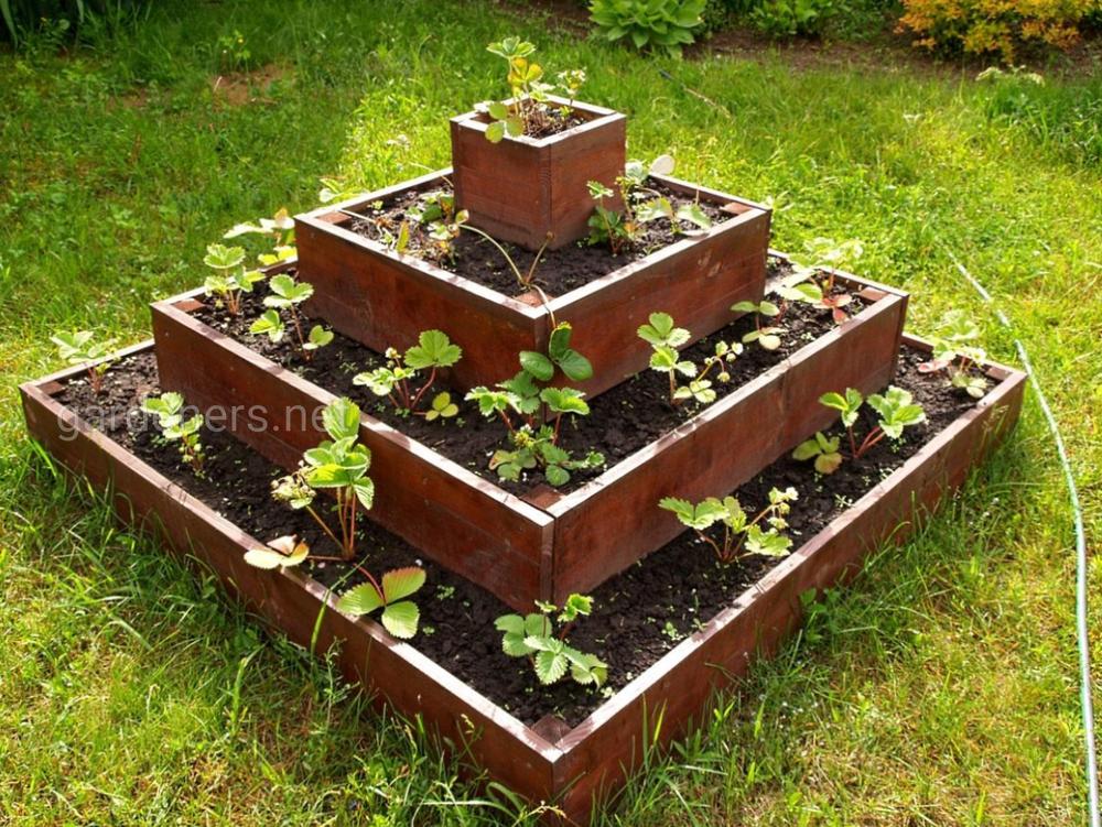 Клубнику можно высадить в грядки в виде пирамиды