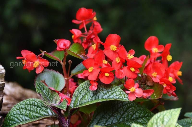 Як доглядати та захищати літні квіти в горщиках протягом літа?