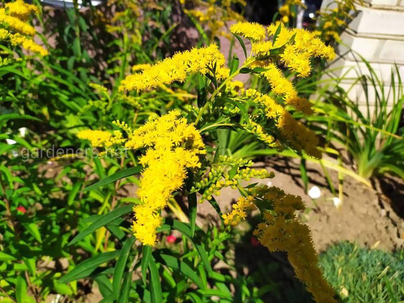 Какие цветы посадить в саду для привлечения бабочек?