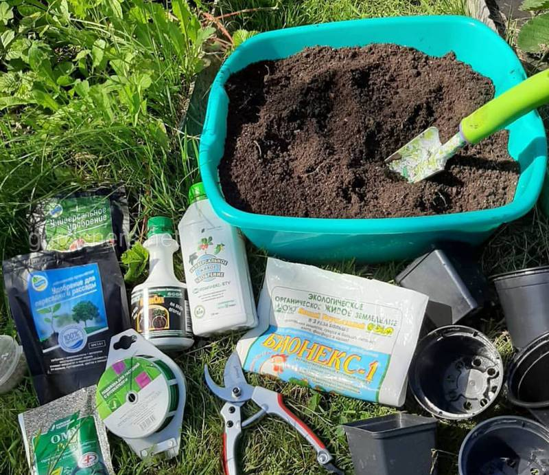 Яке мінеральне підживлення необхідне для вирощування коренеплодів та плодових овочів? Як вносити добрива?