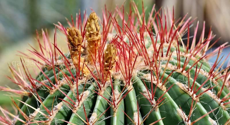 выставка кактусов.jpg