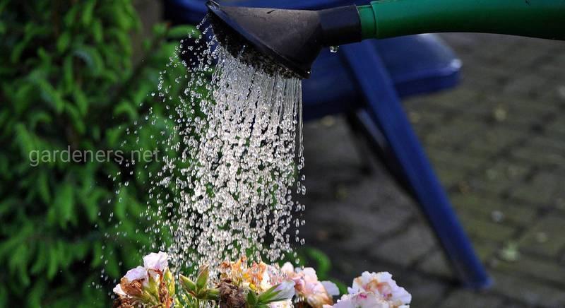 ТОП-25 порад для правильного поливу рослин в саду