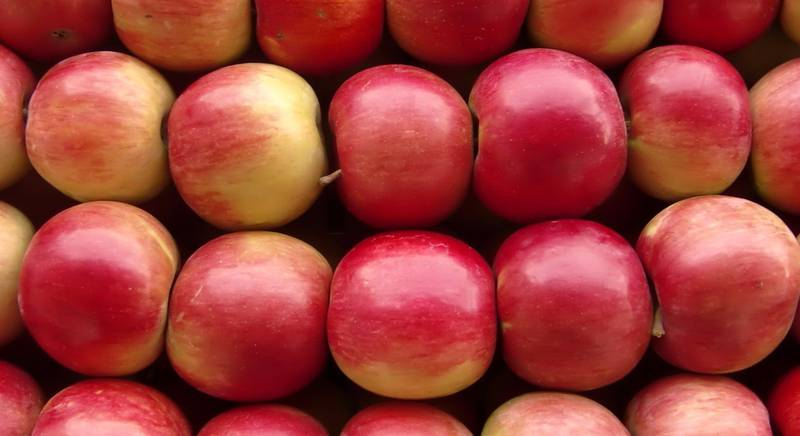 Зимние сорта яблок. Делаем запасы!