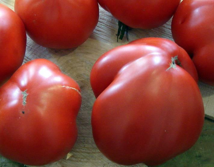 Сорт томата Львиное сердце