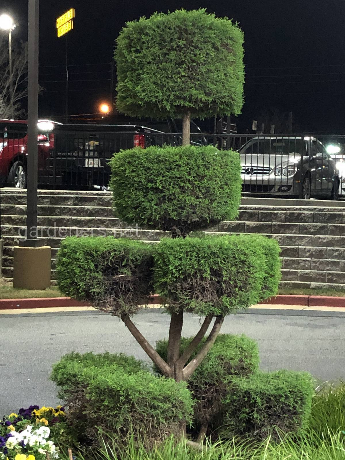 Озеленение LaQuinta In. Hotel in Atlanta, USA