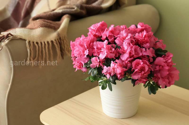 Как выбрать растения для офиса, ванной комнаты и прихожей?