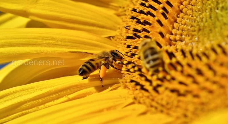 Поради бджолярам-початківцям