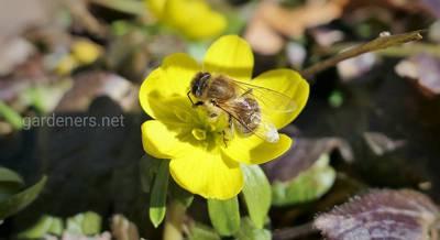 Заботы пчеловода ранней весной.jpg