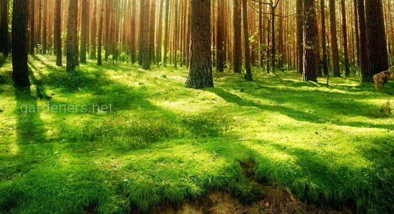13 интересных фактов о лесах и деревьях