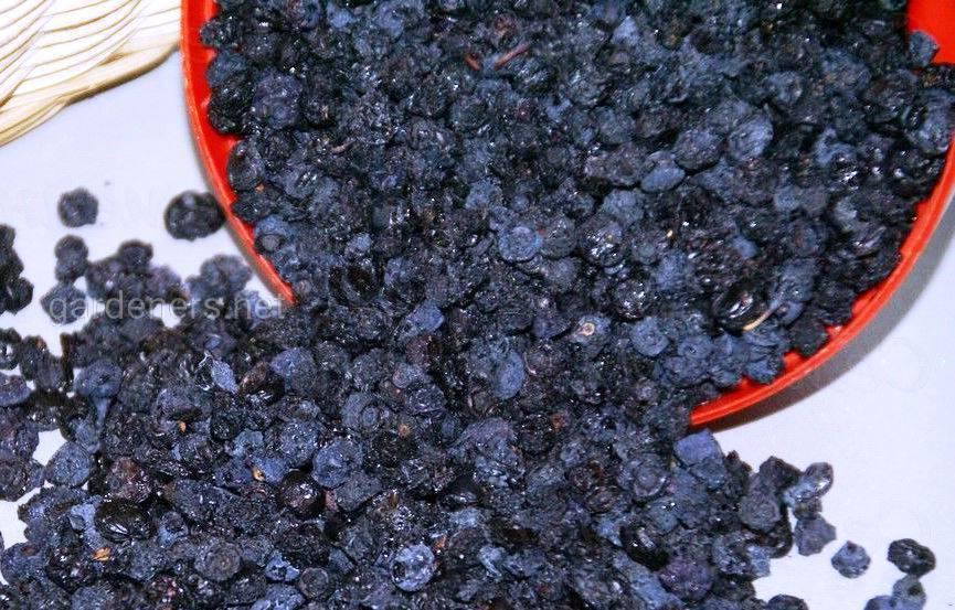 сушеные ягоды черники
