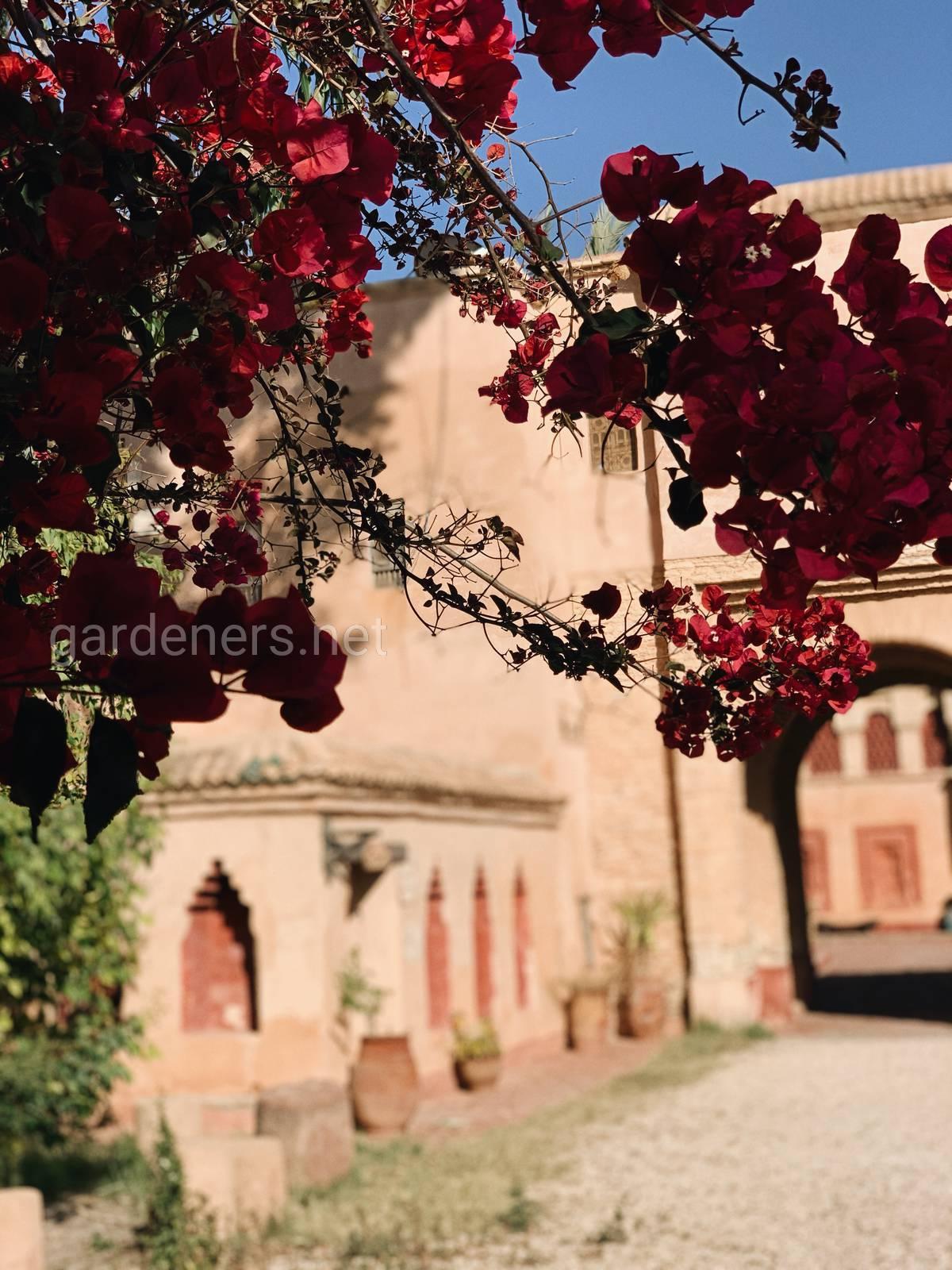 Растение, Agadir