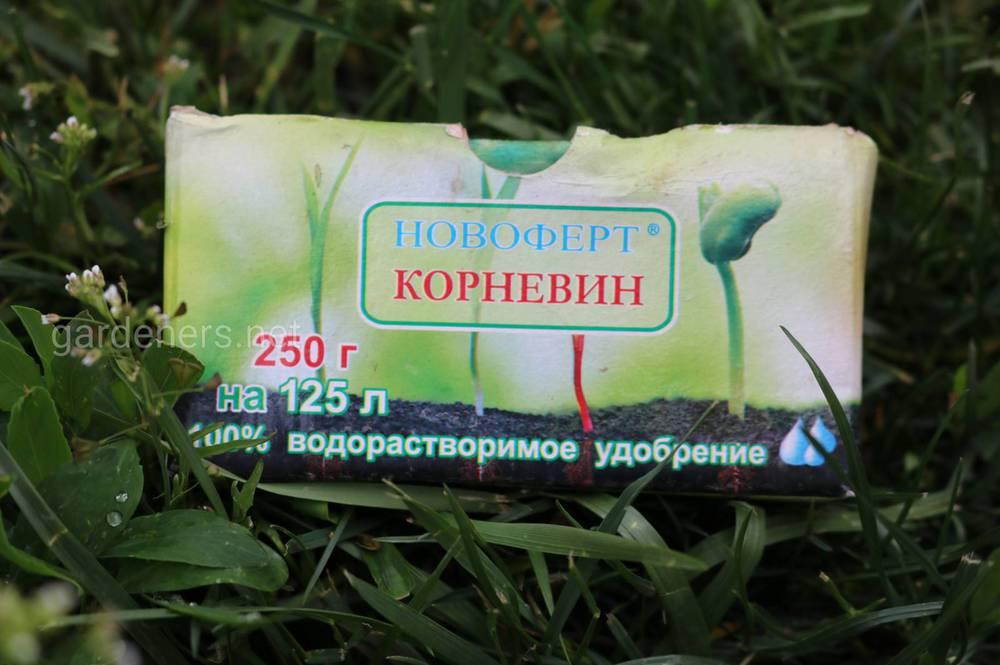 легкое укоренение черенков