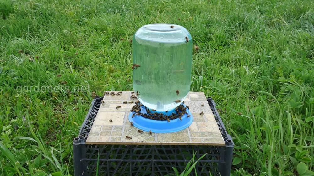 Поилка для труженицы пчелы