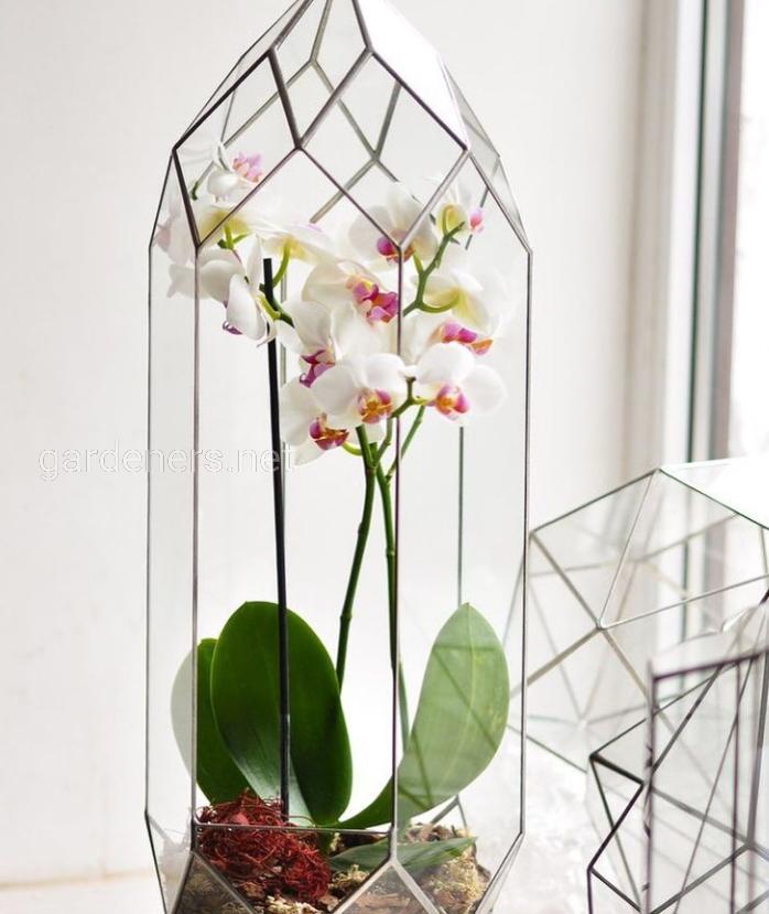 Террариум для орхидеи