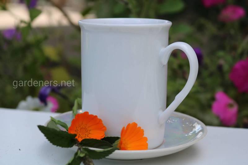 Рецепт чаю з календули