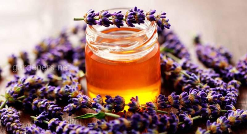 мёд из вереска