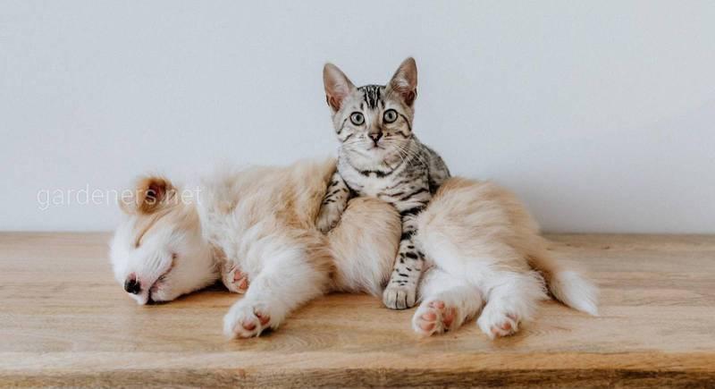 Паразитарные болезни котов и собак