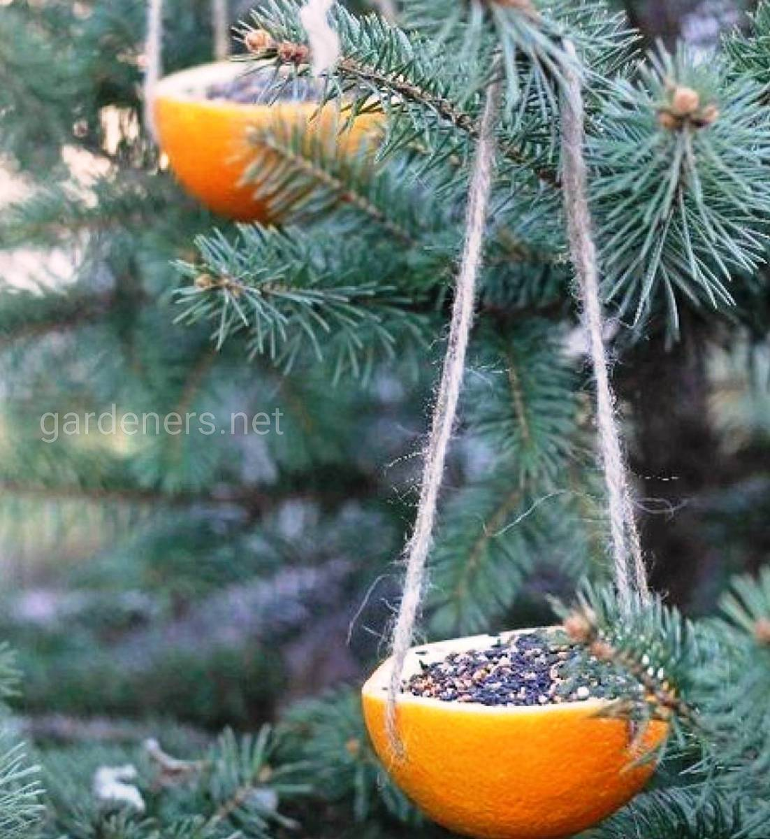 Вазы из апельсинов
