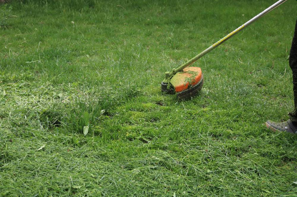 Як відновити пошкоджений газон