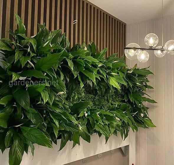 Зелені фітостіни в інтер'єрі