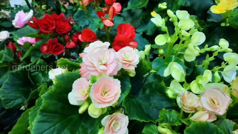 Какие цветы лучше выращивать на кухне?