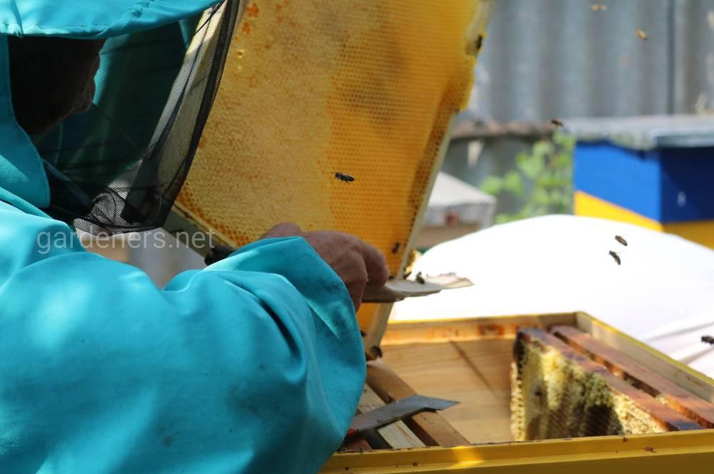 Действия хлореллы на организм пчёл