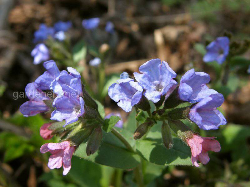 Весенние лекарственные растения для обновления сил