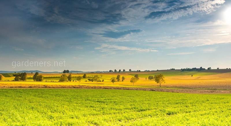 Урожай 2020 под угрозой. В Украине засуха и температурные «качели»