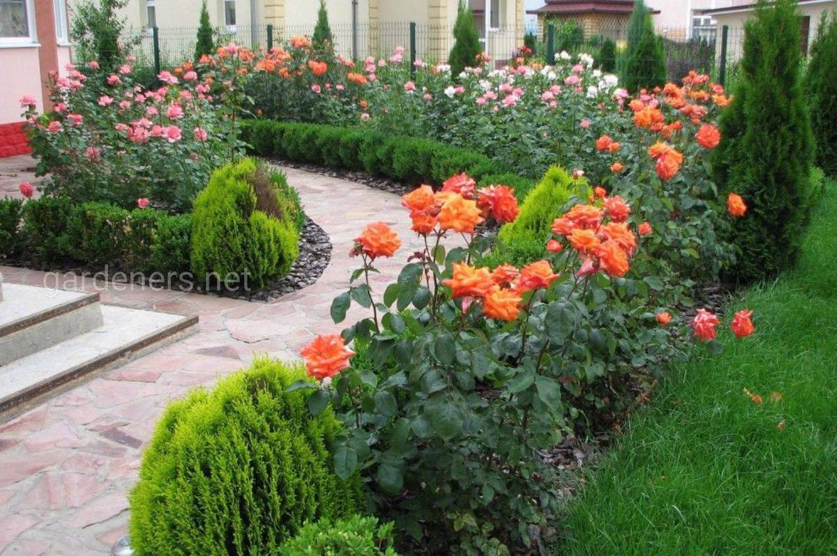 цветник с розами