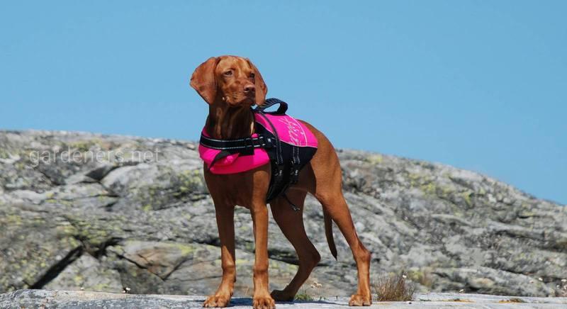 Охлаждающий жилет для собаки - стоит ли покупать