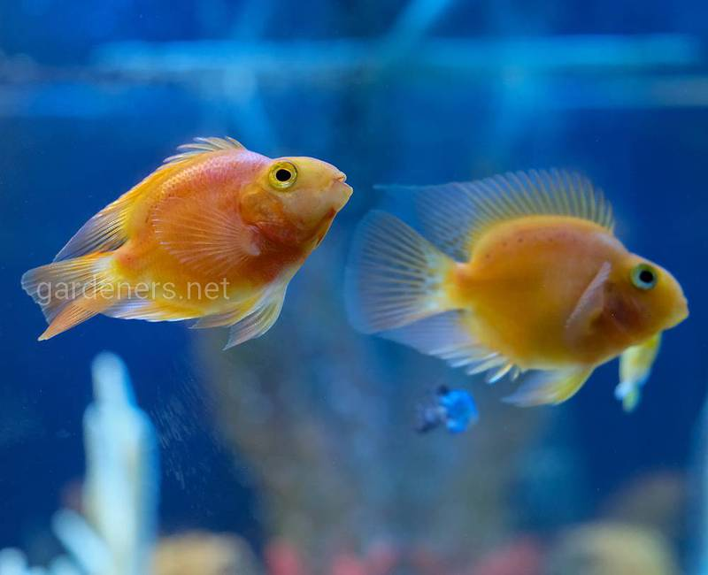 Рыба, аквариум и его жители