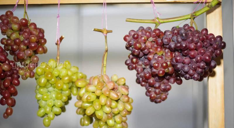 поговорки и пословицы о винограде