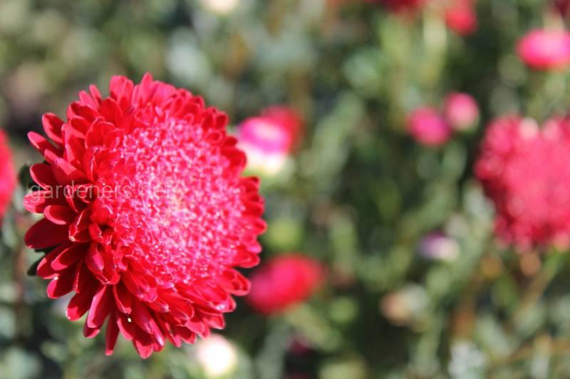 Які квіти треба вирощувати біля східного вікна?