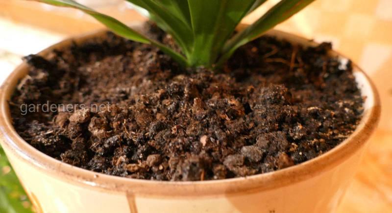 Подбираем грунт для разных комнатных растений