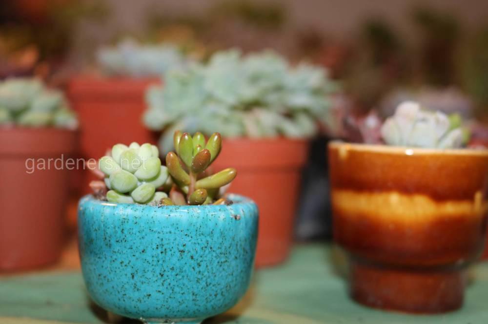 Соотношение размеров кашпо и растений