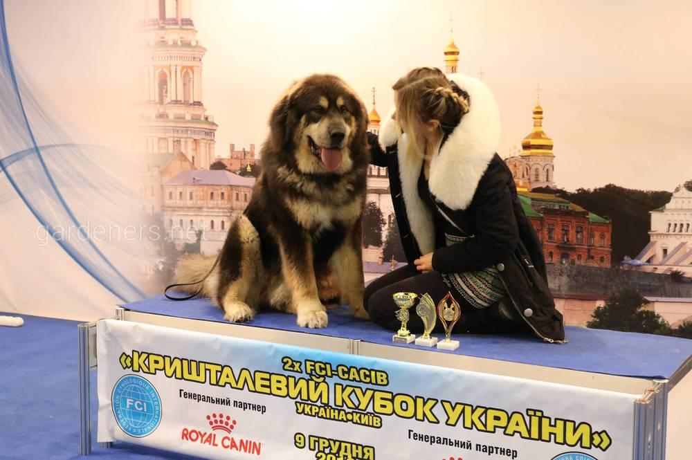 Защита Собак