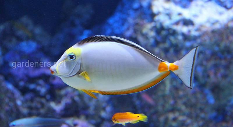 Хвороби риб та їх лікування