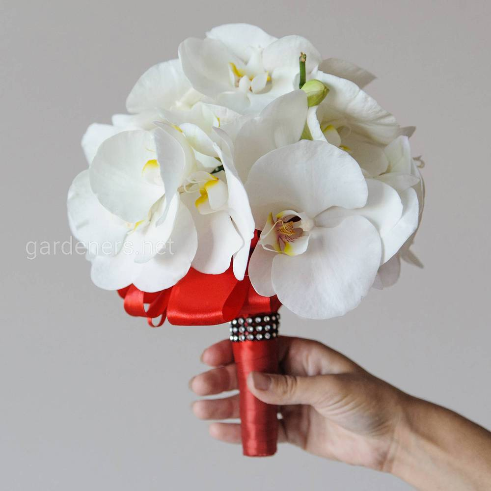 Свадебный букет из белой орхидеи