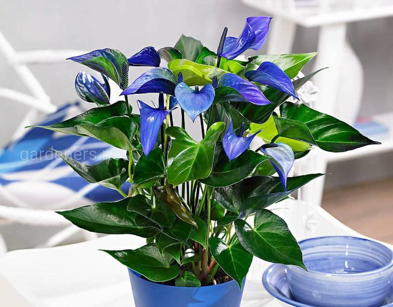 Какие цветы хорошо смотрятся в ванной?