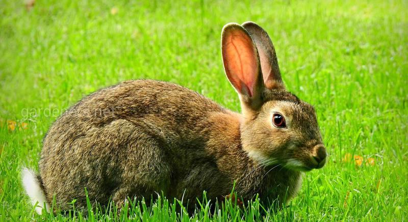 Робимо комбікорм для кролів удома