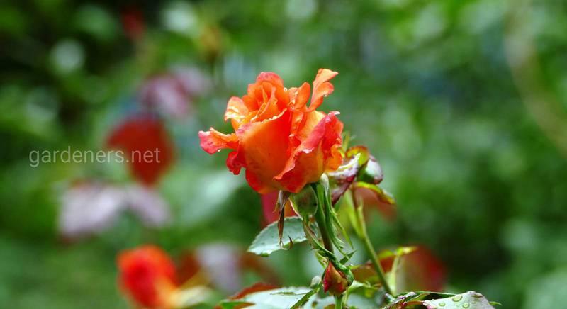 Значение цветов и их цвета.JPG