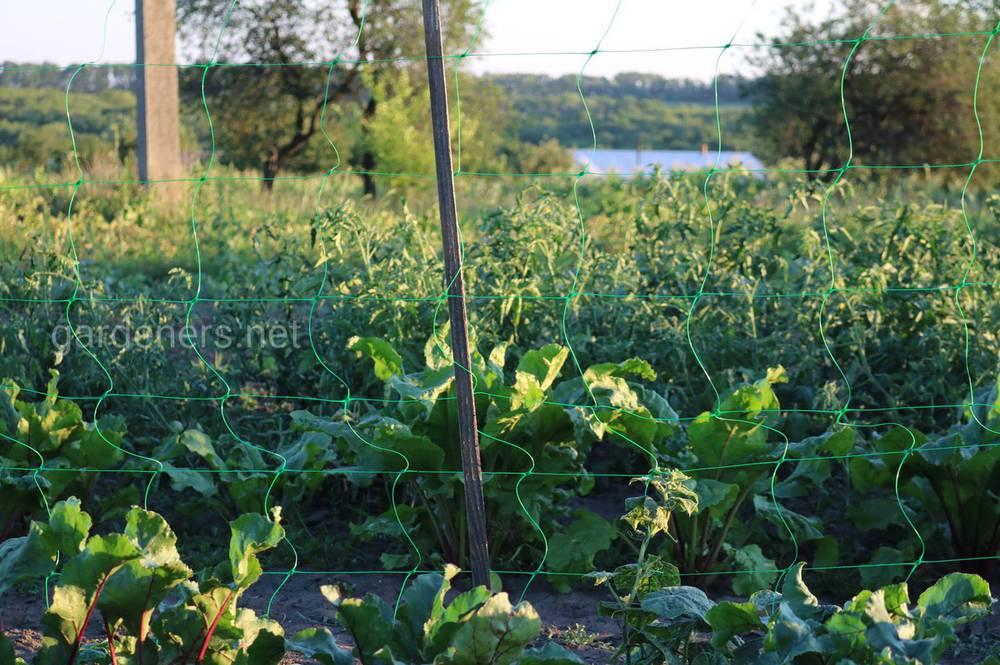 Значення рН ґрунту залежить від багатьох факторів