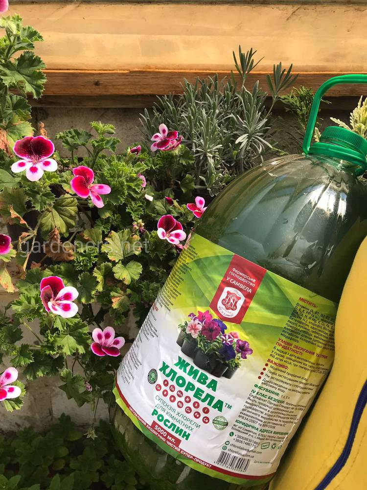 Суспензия Хлореллы для комнатных и садовых цветов.